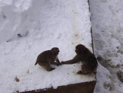 草津熱帯圏 猿