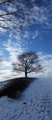 朝雪の「からっぽの木」