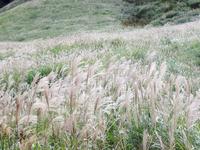 箱根仙石原のすすき草原へ