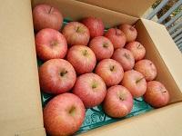 リンゴ100円!