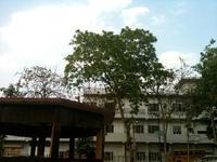 白い建物と木