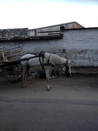 白馬の馬車