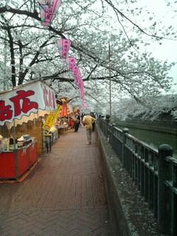 桜祭り2008①