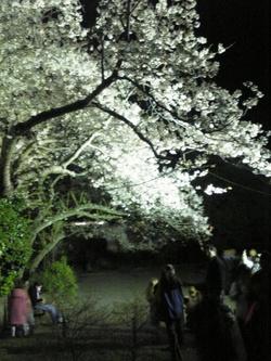 三渓園2008③