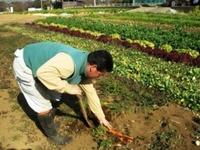 三浦の農家さん