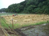 小麦の収穫 ~ 三浦の小麦 ~