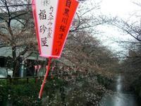 あと少し?! ~ 今日の中目黒の桜 ~