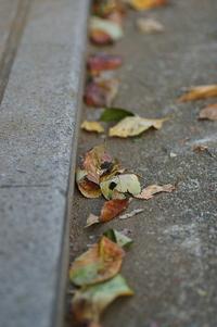 深まりゆく秋に思うこと.゜:.。+゜