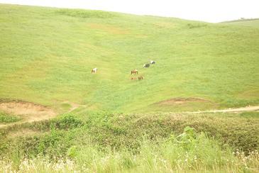 珪藻土採掘現場