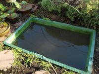めだか池のお掃除と、よからぬもの