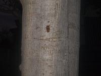 かわいいセミの幼虫たち
