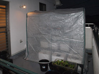 簡易ビニール温室設置