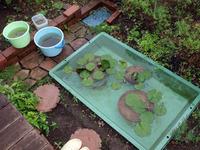 庭のプラ舟を、きれいにお掃除