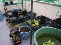冬越し用に、新しいビニール温室