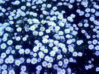 公園の花2