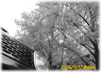 県庁のトコの紅葉はどうかな。。。 2006/11/19 02:00:00